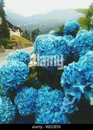 Close-up Of Blue Hydrangea Flowers In Water - Stock Photo