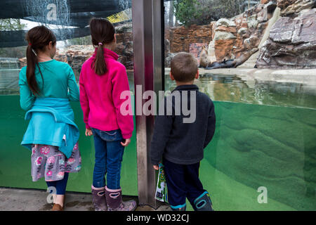 Three children watch as the sea lions rest on the far side of their enclosure at the Fort Wayne Children's Zoo in Fort Wayne, Indiana, USA. - Stock Photo