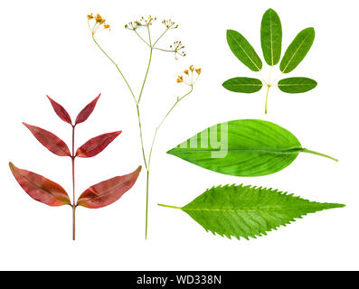 Various shapes plant leaves and flower illustrate graphic isolated fine edge on white background for design work - Stock Photo
