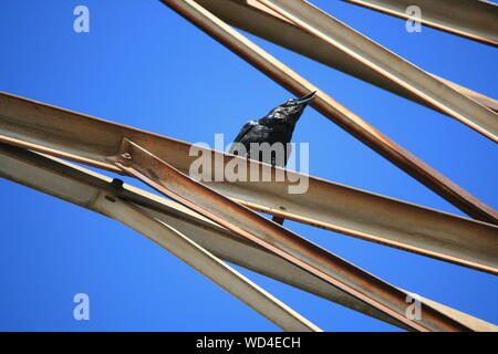 Low Angle View Of Crow Perching On Metal - Stock Photo