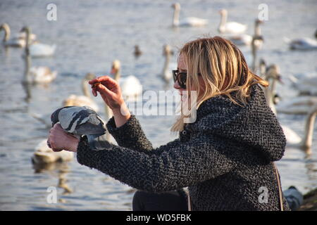 Young wo0man feeding pigeon on her hand, with swans on Vltava river in the background - Stock Photo