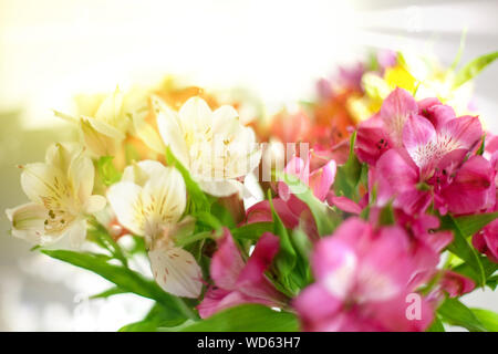 Red, pink and white lily flowers on blurred sun rays background closeup, soft focus flower arrangement in bright morning golden sunshine light - Stock Photo
