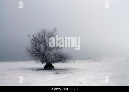 Tree On Snow Covered Landscape Against Clear Sky - Stock Photo