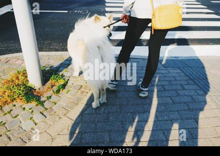 Low Section Of Woman With Dog On Sidewalk - Stock Photo