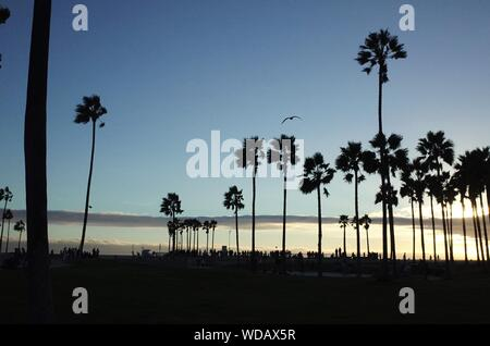 Silhouette Palm Trees In Front Of Sea Against Blue Sky - Stock Photo