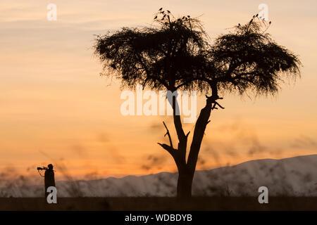Park ranger carrying rifle, Kenya - Stock Photo