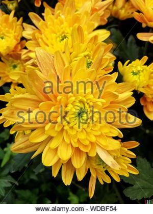 Macro Shot Of Yellow Flower - Stock Photo