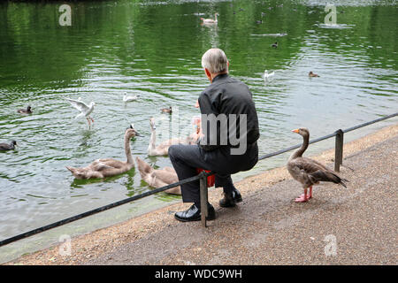Man feeding geese and ducks in London`s St. James`s Park - Stock Photo
