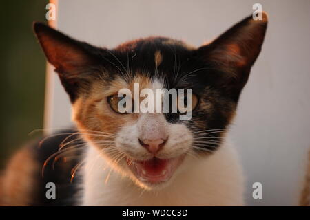 Close-up Portrait Of Angry Cat By Wall During Sunset - Stock Photo