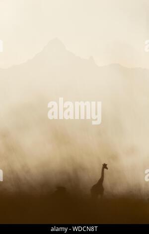 Silhouette of giraffe, Kenya - Stock Photo