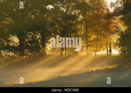 Sun shining through autumn trees - Stock Photo