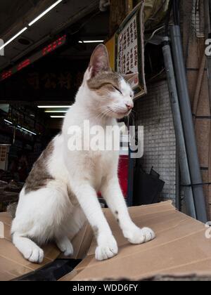 Cat Sitting On Box - Stock Photo