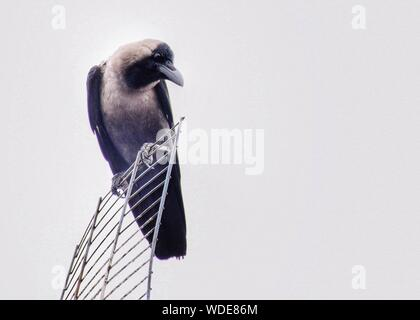 Low Angle View Of Crow Perching On Metal Against Clear Sky - Stock Photo