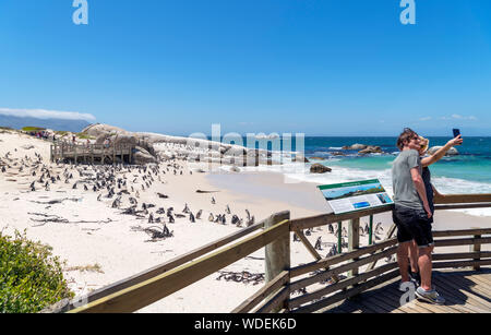 Young couple taking selife at a colony of African Penguins (Spheniscus demersus), Boulders Beach, Simon's Town, Cape Town, Western Cape, South Africa - Stock Photo