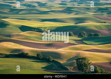 Aerial overhead view of the Palouse from Steptoe Butte, showing different colored crop lands and rolling hills at sunset - Stock Photo