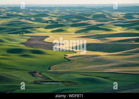 Beautiful view of the Palouse from Steptoe Butte, showing shadows of the rolling farmland hills at sunset - Stock Photo