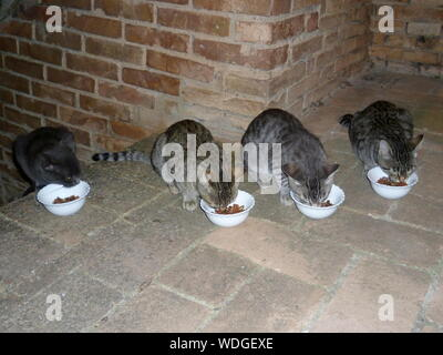Cats Eating From Bowl - Stock Photo