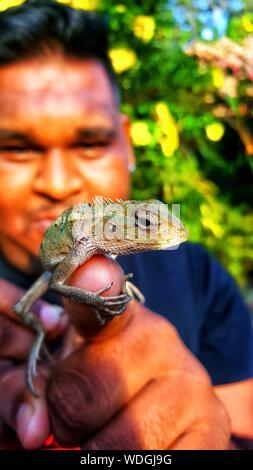 Close-up Of Man Holding Bearded Dragon - Stock Photo