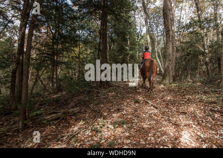 Rear View Of Boy Riding Horse In Forest - Stock Photo