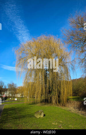 Weeping Willow Tree In Park Against Sky - Stock Photo
