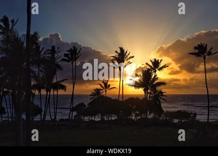 Silhouette Coconut Palm Tree On Beach Against Sky At Sunset - Stock Photo