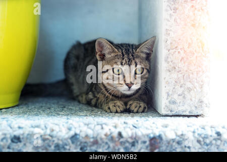 Cute adorable funny small tabby kitten sitting in dark corner while hunting or stalking outdoors. Beautiful young little cat playing at home backyard - Stock Photo