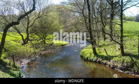 New Forest Hampshire England - Stock Photo