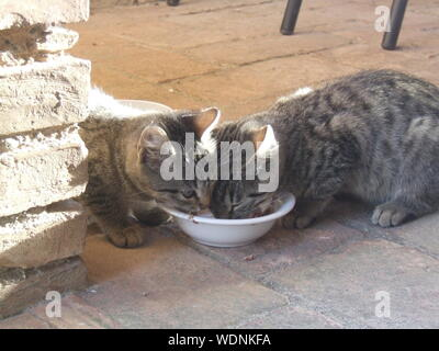 Two Cats Eating From Bowl - Stock Photo