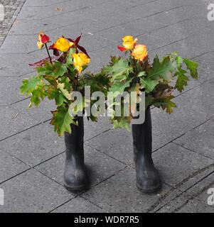 High Angle View Of Yellow Roses In Rubber Boot At Walkway - Stock Photo
