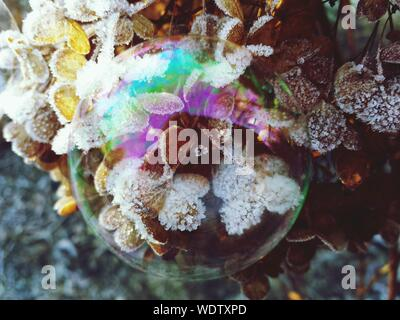 Close-up Of Bubble Against Frozen Leaves - Stock Photo