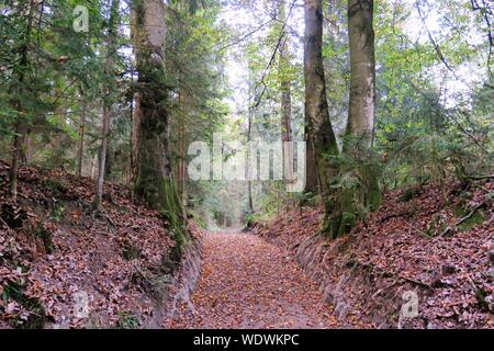Footpath Amidst Trees At Forest - Stock Photo