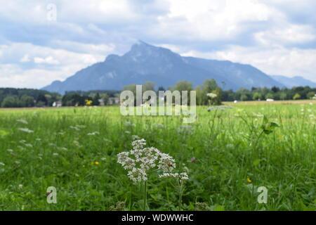 Nature scene of Austria during summer - Stock Photo