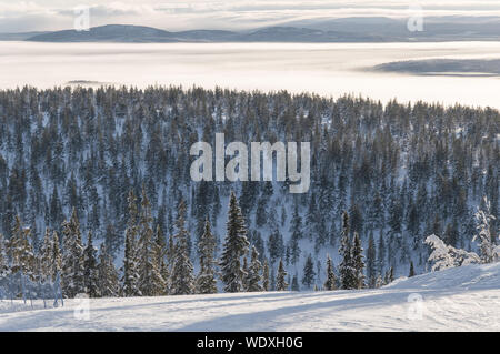 Scenic View Of Forest Against Sky During Winter - Stock Photo