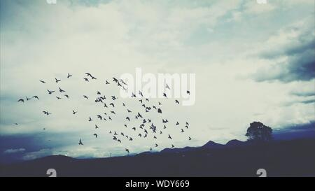 Silhouette Birds Flying Over Mountains Against Cloudy Sky - Stock Photo