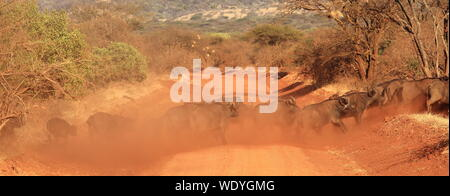 Buffaloes Crossing Dirt Road By Dust At Tsavo East National Park - Stock Photo