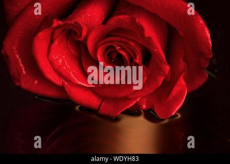 Close-up Of Red Rose Against Blurred Background - Stock Photo