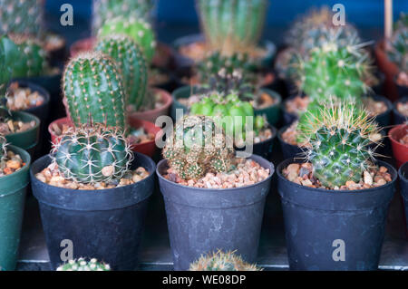 Close-up Of Pots Of Cactus On Retail Display - Stock Photo