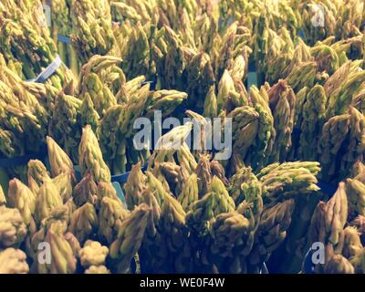 Full Frame Shot Of Plants Growing On Field - Stock Photo