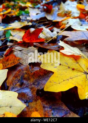 High Angle View Of Leaves Floating On Water - Stock Photo