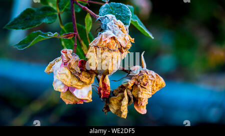 Close-up Of Dried Plant Against Blurred Background - Stock Photo