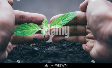 Close-up Of Hand Planting Seedling