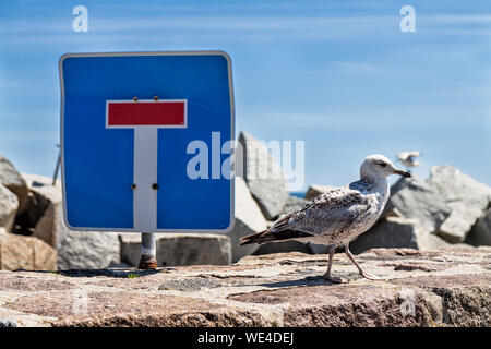 Seagull By Sign On Rock Against Sky - Stock Photo