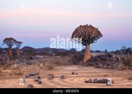 Quiver tree forest on blue and pink twilight sky background and magic stone circles, fantastic african landscape in Keetmanshoop, Namibia - Stock Photo