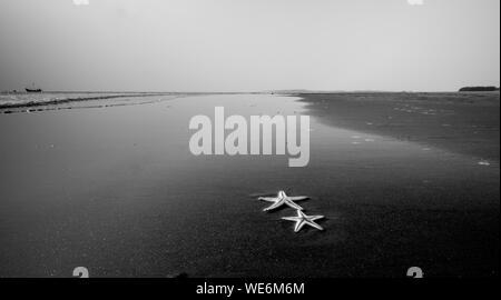 View Of Starfish On Beach - Stock Photo