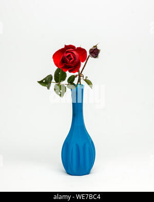 Close-up Of Red Rose In Blue Vase Against White Background - Stock Photo
