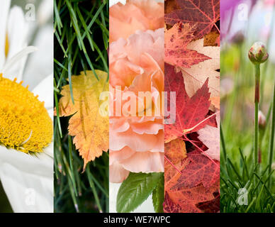 Collage Of Autumn Leaves And Flowers With Bud - Stock Photo