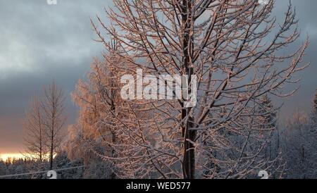 Snow Covered Trees Against Cloudy Sky - Stock Photo