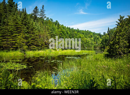 Scenic view of a secluded lake sedge meadow grass surrounded by lush green Boreal forest in summer on the Talus lake Trail hike in Sleeping Giant Prov