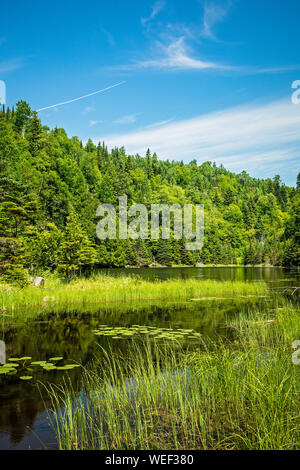 Landscape of a secluded sedge meadow lake in the lush green Boreal forest on the Talus lake Trail hike in Sleeping Giant Provincial Park, Ontario