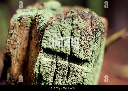 Close-up Of Moss On Tree Stump - Stock Photo